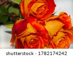 Roses. Bouquet Of Roses. Orang...
