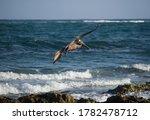 Tropical Wildlife. Seabirds....