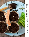 Green peas seeds and planting pots with tags and small shovel on a blue garden board. - stock photo