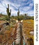 Sonoran Desert In Arizona...