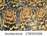 Stock photo leopard skinned tortoise shell 178354208