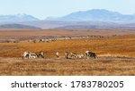 A herd of reindeer in the...