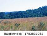 Grassland With Green Tree Line