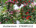 Beautiful Fresh Rose Garden...