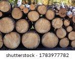 Pile Of Wood Logs On Edge Of...
