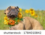 French Bulldog Dog Wearing A...