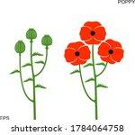 Poppy Flower. Isolated Poppy...