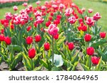 Spring Floral Background....
