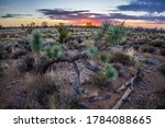 Desert Sunrise Over Joshua Tree ...