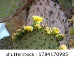 Green Spiky Cactus With Yellow...