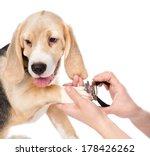 Human Hand Cutting Dog Toenail...