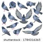 Dove Bird Isolated Cartoon Set...
