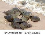 Horseshoe Crabs Spawning On The ...