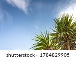 Spiky Fronds Of New Zealand\'s...