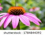 Beautiful Blooming Flower Of...