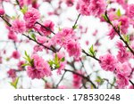 red plum blossom | Shutterstock . vector #178530248