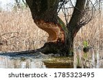 Thick Tree Standing On A River...