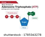 biology diagram show basic... | Shutterstock .eps vector #1785363278