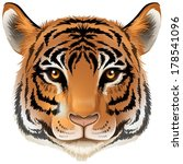 Illustration of a head of a tiger on a white background - stock vector