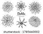 Set Of Dahlia Flower And Leaf...