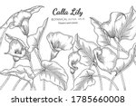 Calla Lily Flower And Leaf Hand ...