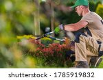Summer Season Garden Decorative Trees Trimming by Caucasian Professional Gardener in His 40s. Landscaping and Gardening Theme. - stock photo