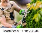 Caucasian Gardener Trimming Garden Decorative Plants Using Large Professional Garden Scissors Close Up. Landscaping and Gardening Industry Theme. - stock photo