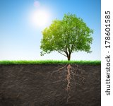 tree with roots  | Shutterstock . vector #178601585