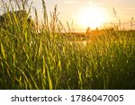 Summer Background   Sunset Ove...