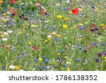Colorful Summer Meadow With...