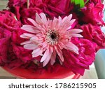 a image of pink flower with... | Shutterstock . vector #1786215905