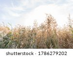 field with cloudy blue sky.... | Shutterstock . vector #1786279202