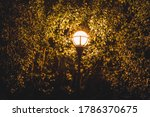Lamp Post With Tree In...