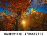Beautiful Autumn Forest. Look...