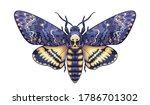 hand drawn acherontia styx...   Shutterstock .eps vector #1786701302