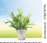 rosemary in old metal bucket on ... | Shutterstock . vector #178678796