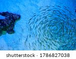 Group Of Fish Swimming Together ...