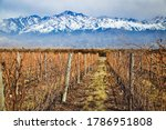 Vineyards during the winter, in the background the Andes, Mendoza Argentina 2019