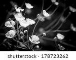 Backlit Buttercup Flowers In...