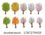 Deciduous Tree At Different...
