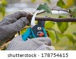 Pruning Fruit Trees By Pruning...