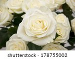 Stock photo white rose closeup background of flowers buds 178755002