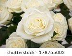 White Rose Closeup. Background...