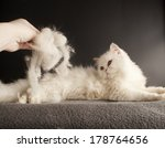 woman holding a pile of cat... | Shutterstock . vector #178764656