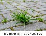 A Close Up Bunch Of Green Grass ...