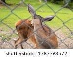 little deer in the reserve... | Shutterstock . vector #1787763572