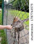 man feeding deer in the reserve | Shutterstock . vector #1787763575