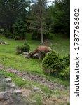 little deer in the reserve... | Shutterstock . vector #1787763602