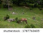 little deer in the reserve... | Shutterstock . vector #1787763605