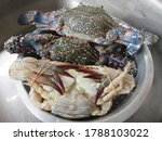 Small photo of Fresh Blue swimming crabs are arguably Australia's favorite eating crab and are highly sought by commercial and recreational fishers for their tasty white meat
